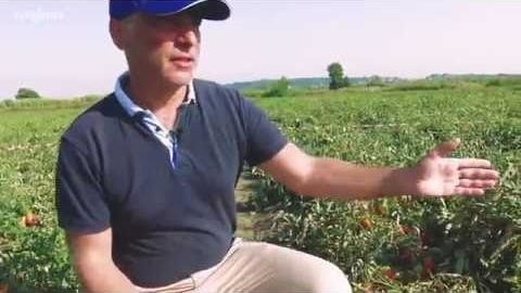 ind-tomato-video-thumb.jpg